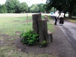 side view of the tree stump